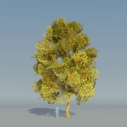 Maple Tree Autumn 3