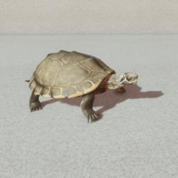 Animal - Pearl turtle