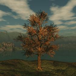 Fall Oak 1