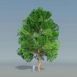 Maple Tree Dark Green 5