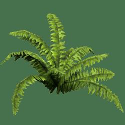 Plant Light Fern