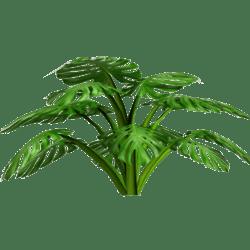 Elephant Ear Plant 1