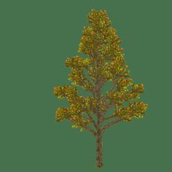 Maple Tree - FALL