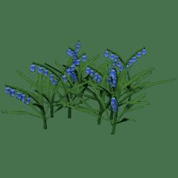 Plant Bluebellls