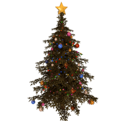 Christmas tree - Fir