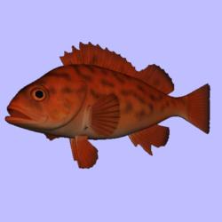 Rockfish Vermillion Animated