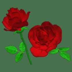 Single Light Red Rose