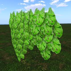 Hanging Broad Leaf Ivy 01