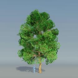 Maple Tree Dark Green 3