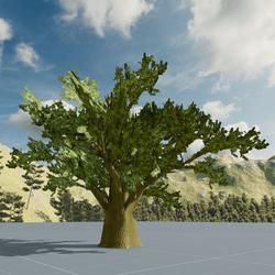 Olive Tree L