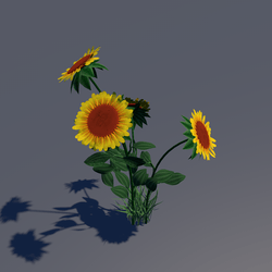 sunflower with grass