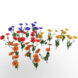 Plant-Poppy Group XL Colors