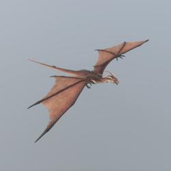 Flying Dragon Animated