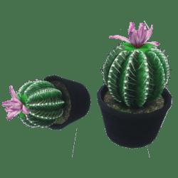 Cactus with POT