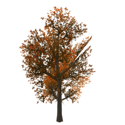 Tree 2 - Copper