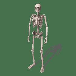 Skeleton (Weathered) - Avatar