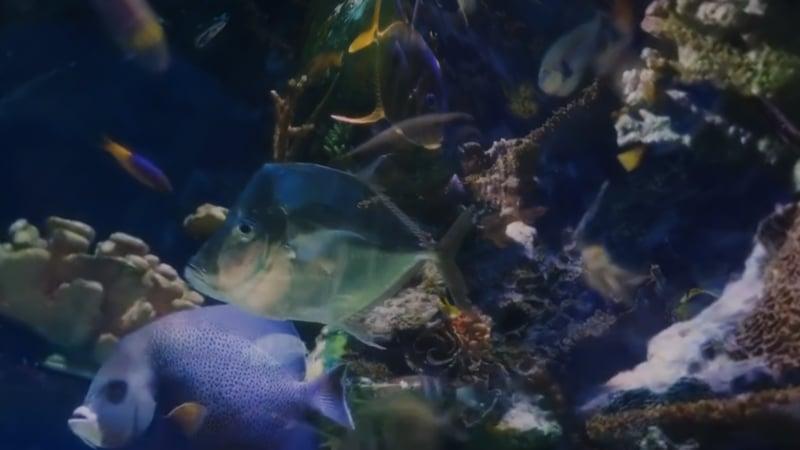 Cosmic Aquarium