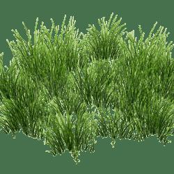 Grass Patch Round