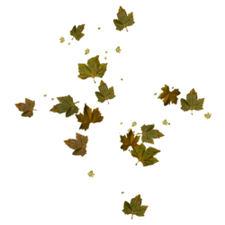 Dead Leaves_Small