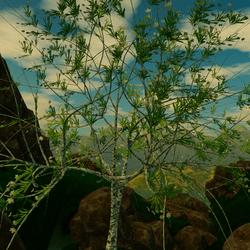 Twisted Fantasy Tree 01