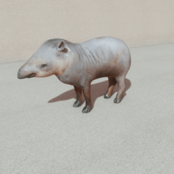 Animals - Tapir