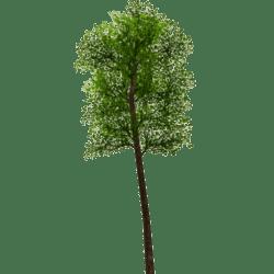 Tree 7 - Green