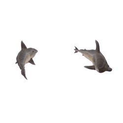 Sharks swimming in circle