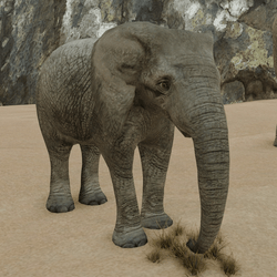 African Elephant baby (animated)