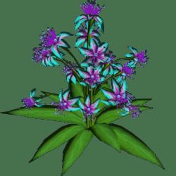 Star Flowers 11