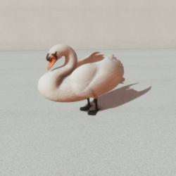 Animals - Swan