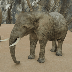 African Elephant V1 (animated)