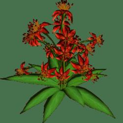 Star Flowers 18