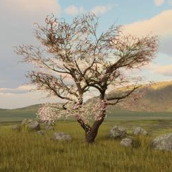Cherry Blossom Tree 1