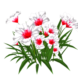 Petunia 14