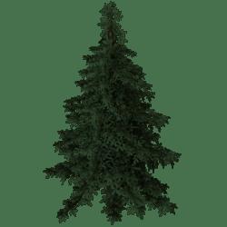 Christmas Tree - Fir