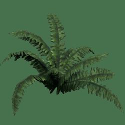 Plant Dark Fern
