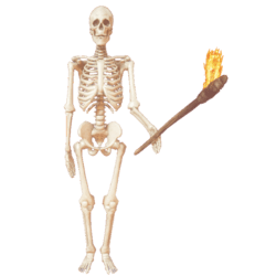 Skeleton with torch anim L