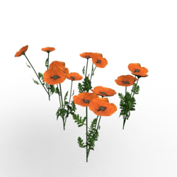 Plant-Poppy Group Orange