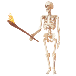 Skeleton with torch anim R