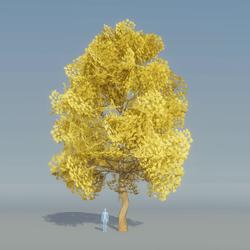 Maple Tree Yellow 5