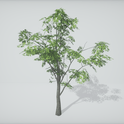 TKA-Tree 2A