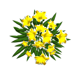 Petunia 12