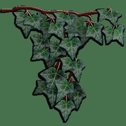 Dark Green Hanging Ivy Center