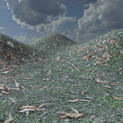 GRASS VALLEY TERRAIN LANDSCAPE - FALLEN LEAVES