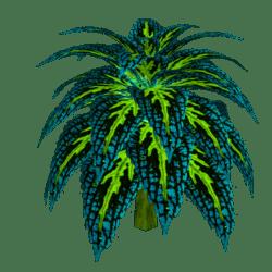 Coleus Plant 4