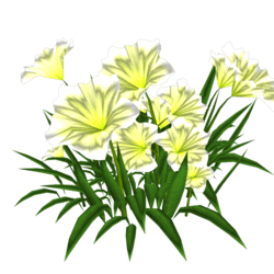 Petunia 13