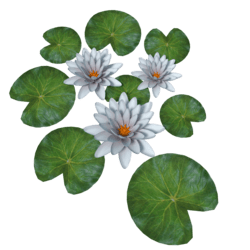 Plant Waterlily Light