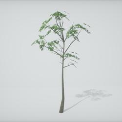 TKA-Tree 3A