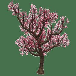 Cherry Blossom Tree 2