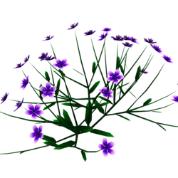 Princess Flower Plant - Small